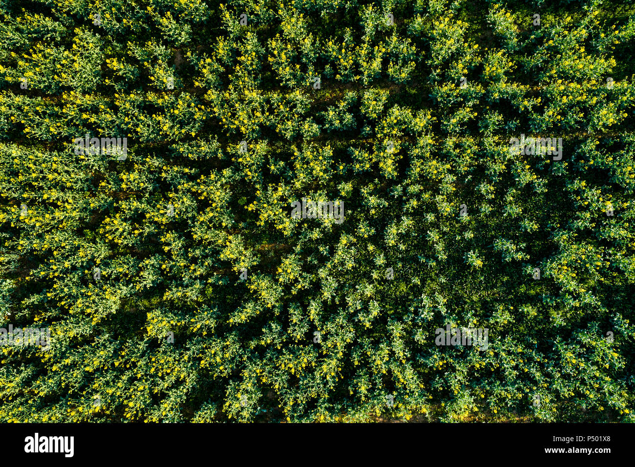 Germany, Baden-Wuerttemberg, Swabian Alb, Aerial view of Schurwald in spring - Stock Image