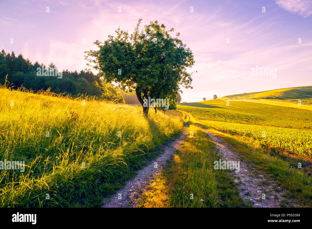 Austria, Innviertel, field and dirt track in the morning - Stock Image