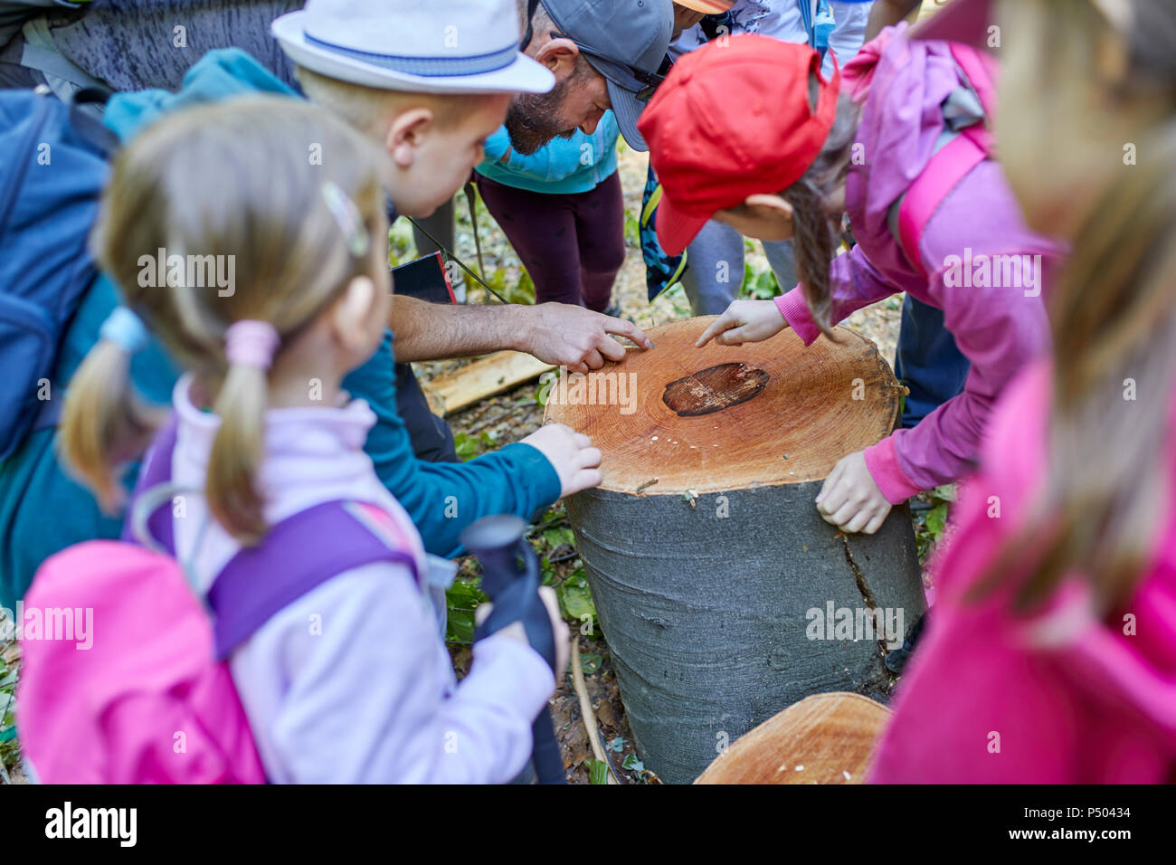Man and kids on a field trip examining tree stump - Stock Image