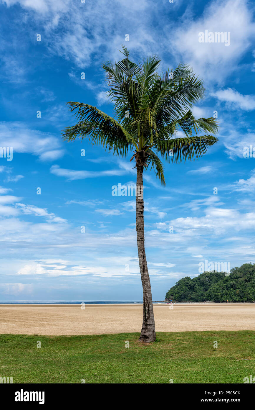 Palm tree on the beach in Borneo, Malaysia - Stock Image