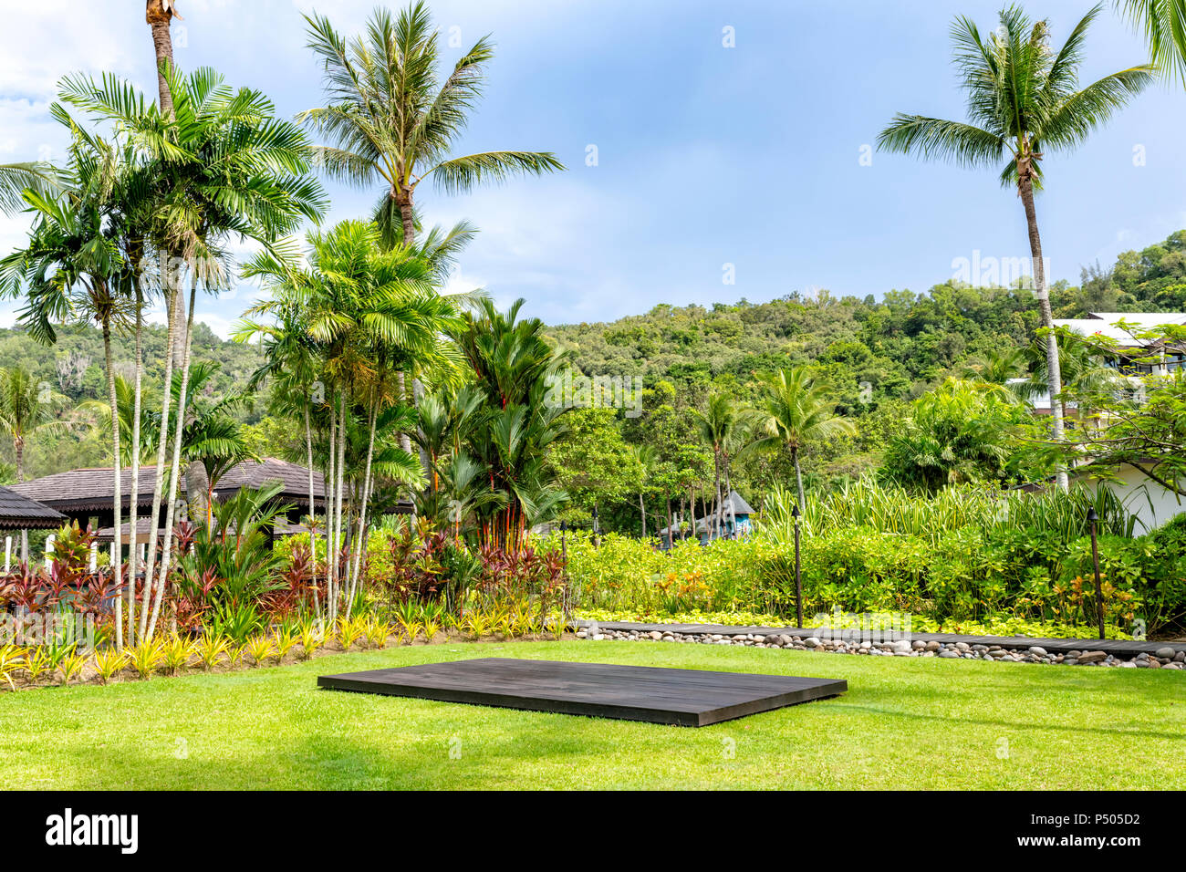 Palm trees and other exotic vegetation against a blue sky in Borneo, Malaysia - Stock Image