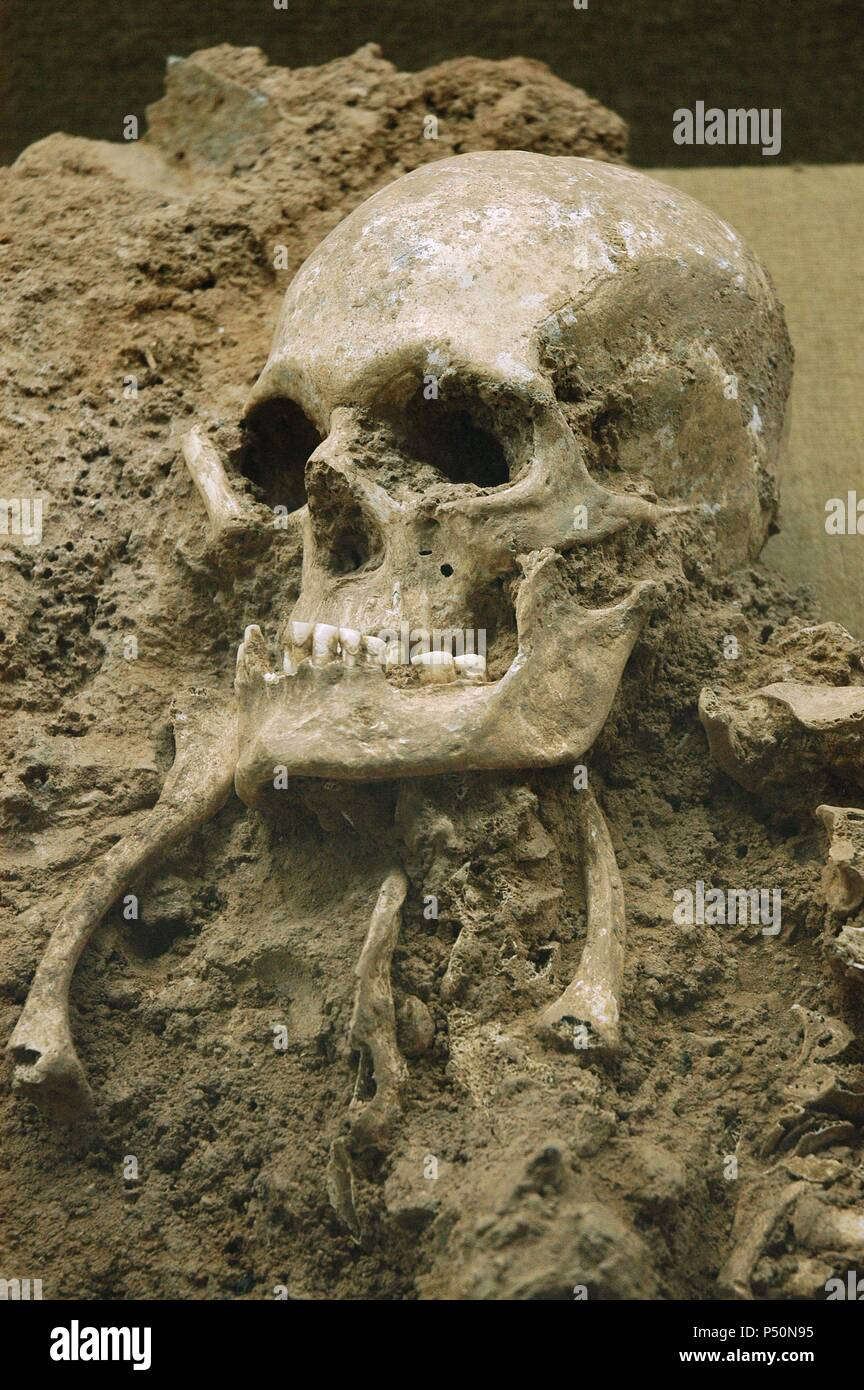 Skull from 'Escoural Grotto'. Neoli_tco Middle-end. Archaeology Museum. Montemor-o-Novo. Portugal. - Stock Image