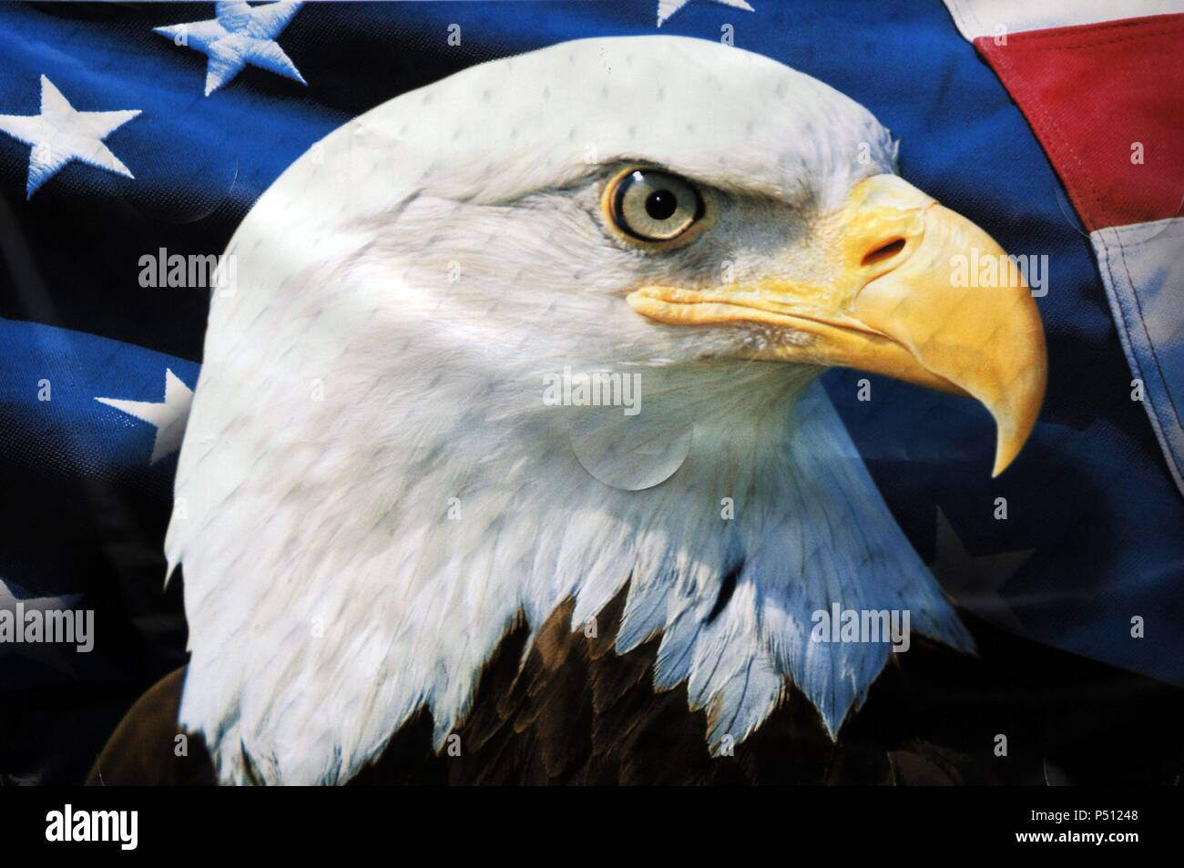 The Bald Eagle It Is The National Bird And Symbol Of The United