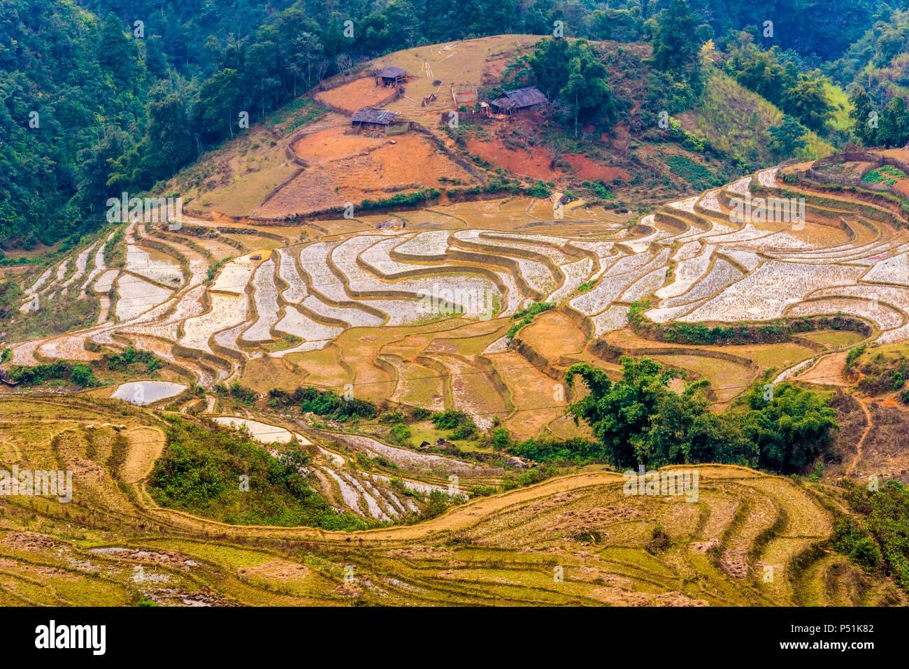 Vietnam, Sapa -  Ricefields - Stock Image
