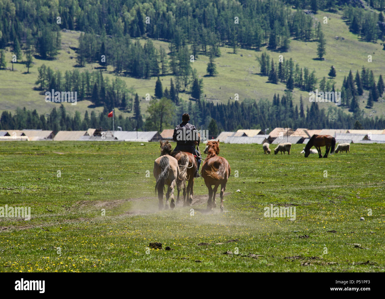 Kazakh horseman at Kanas Lake National Park, Xinjiang, China - Stock Image