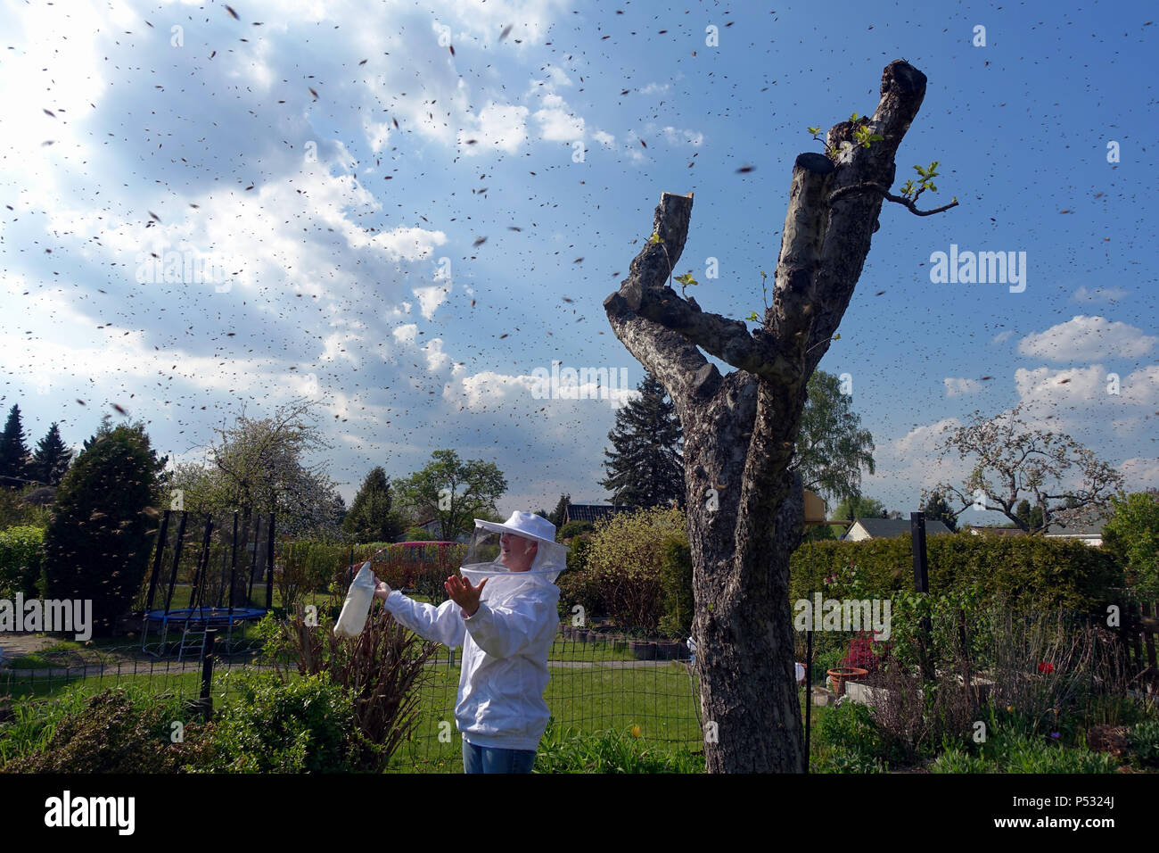 03.05.2016, Berlin, swarm of bees in the air in a small garden in Bukow, beekeeper admires this natural spectacle - Stock Image