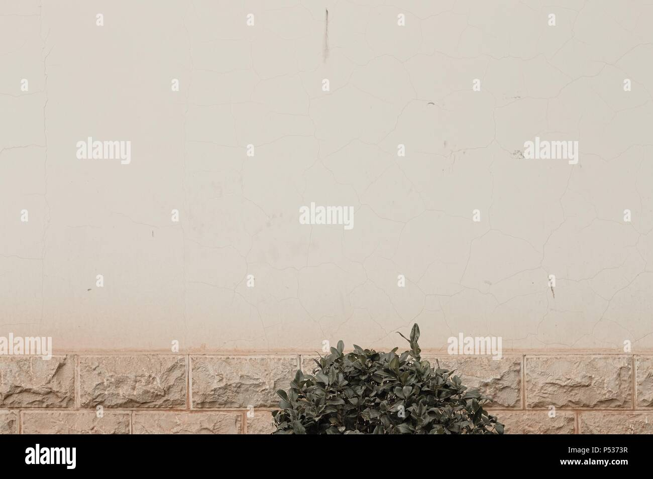 Ruined wall background with an isolated plant (Kunming, Yunnan, China) Stock Photo
