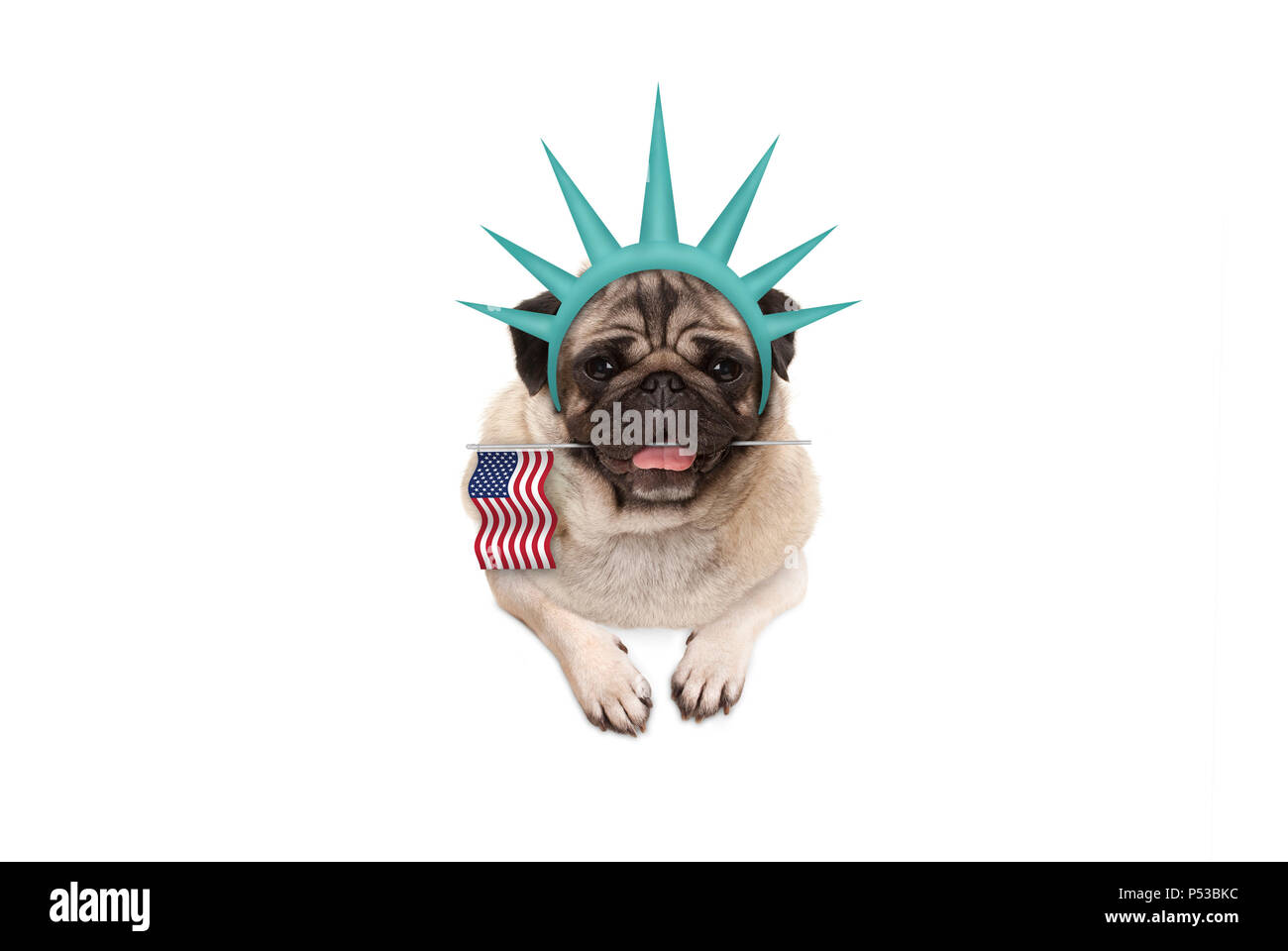 smiling pug puppy dog holding American flag, hanging on white banner, wearing lady Liberty crown, isolated Stock Photo