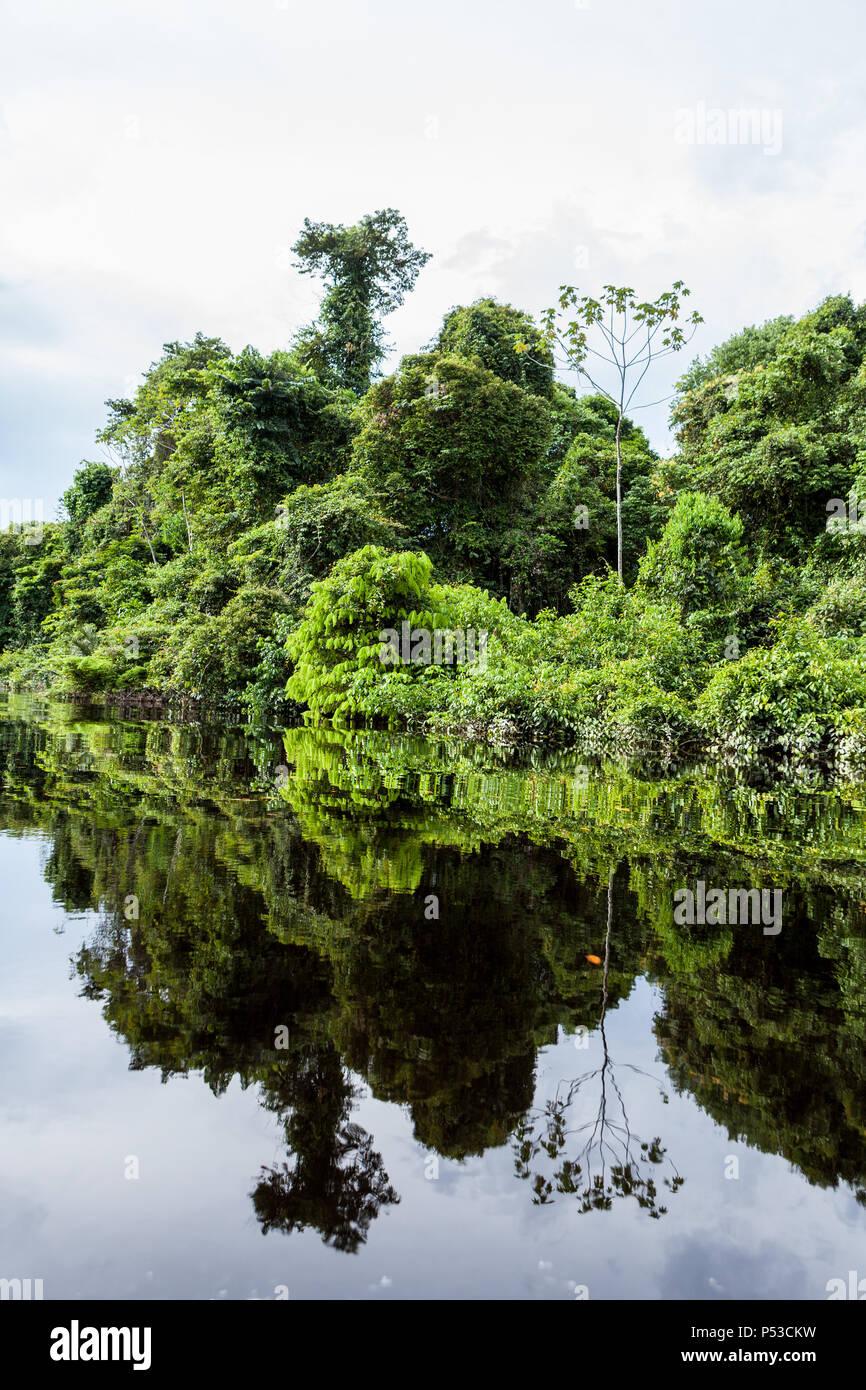 Amazonas, Brazil. Dark waters of the Negro River mirror the vegetation of the Amazon rainforest. - Stock Image
