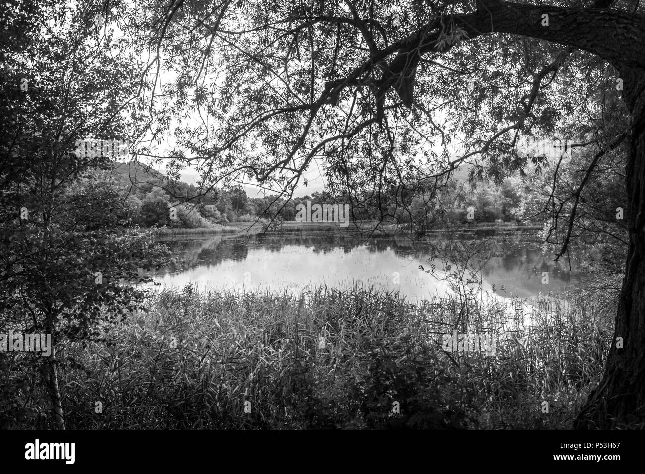 lake panorama countryside - Stock Image