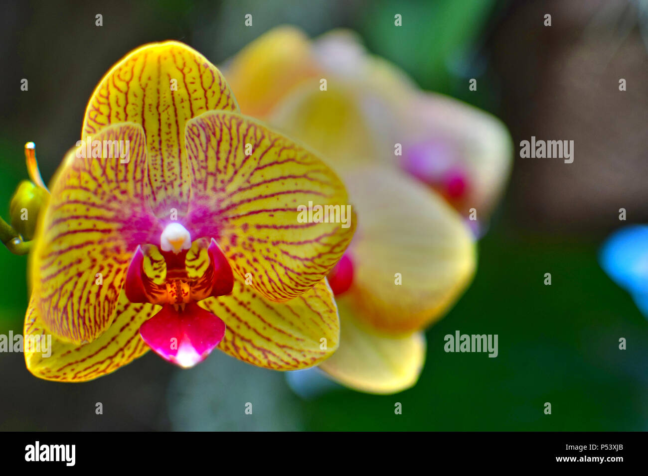 A flower taken at a low depth of field. - Stock Image