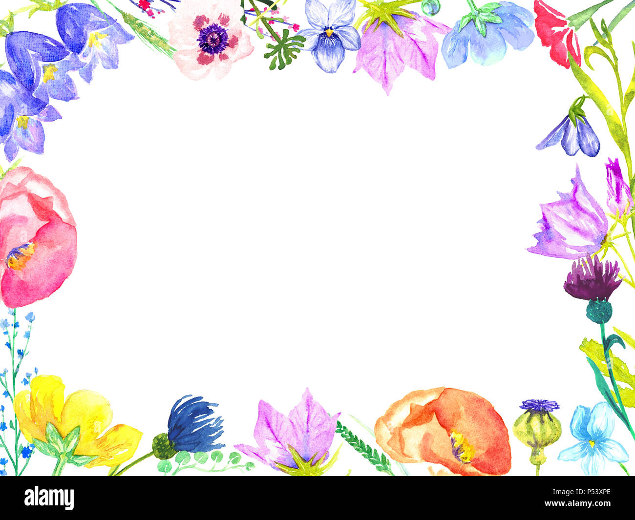 Horizontal frame of colorful wild flowers: bellflowers, violets, forget-me, cornflower, poppies (forest and meadow), hand painted watercolor, design - Stock Image