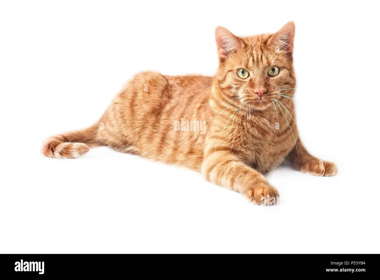 Cute ginger cat lying on the floor - isolated on white background. Stock Photo