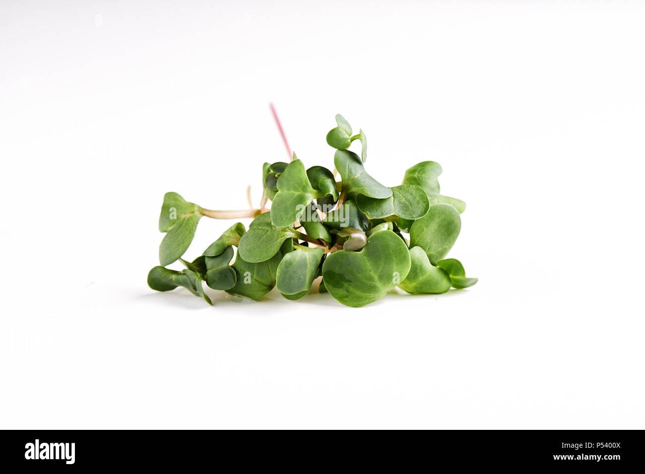 microgreen daikon twigs isolated on white background Stock Photo