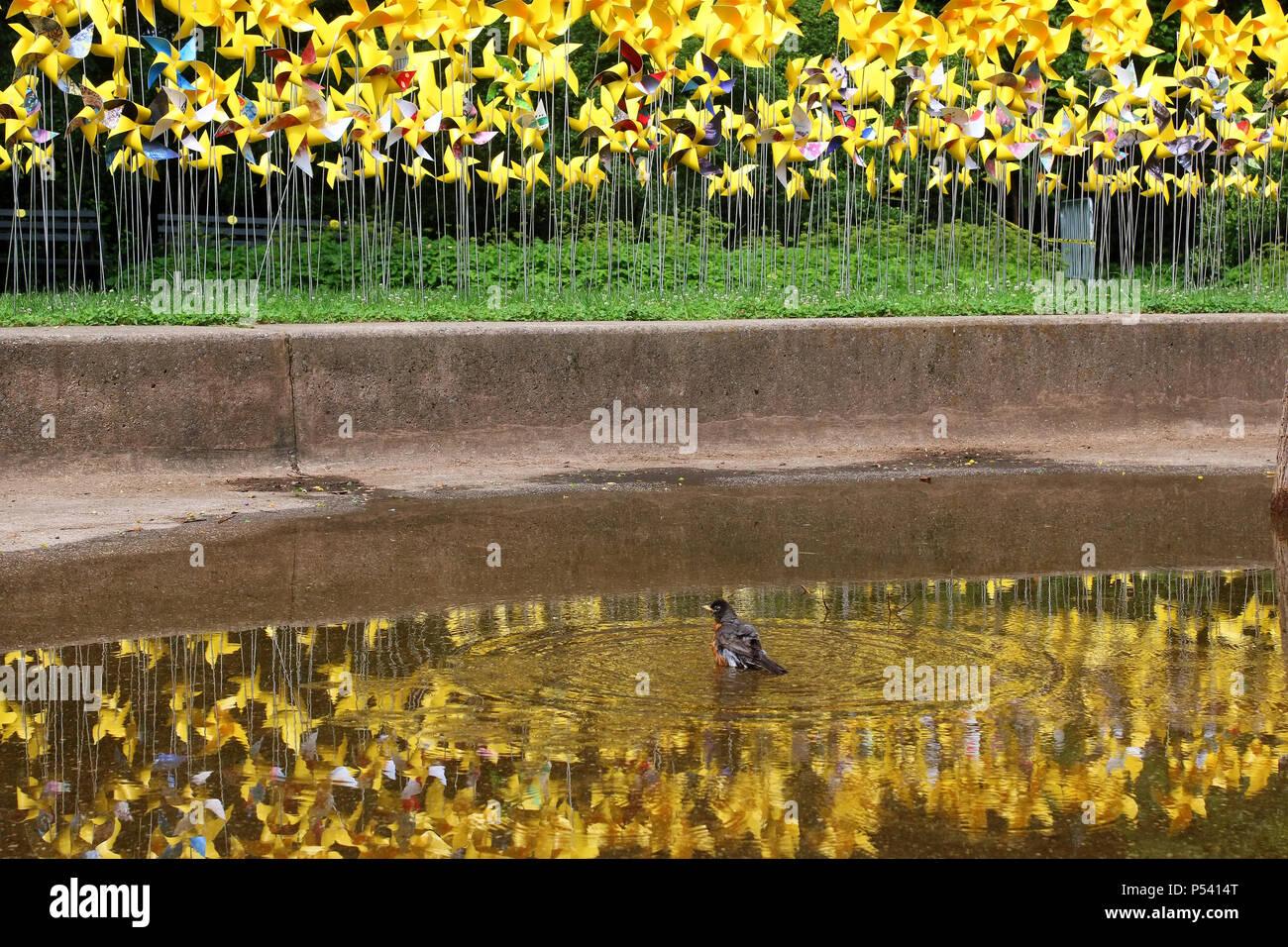 Exelent Garden Pinwheels Picture Collection - Brown Nature Garden ...