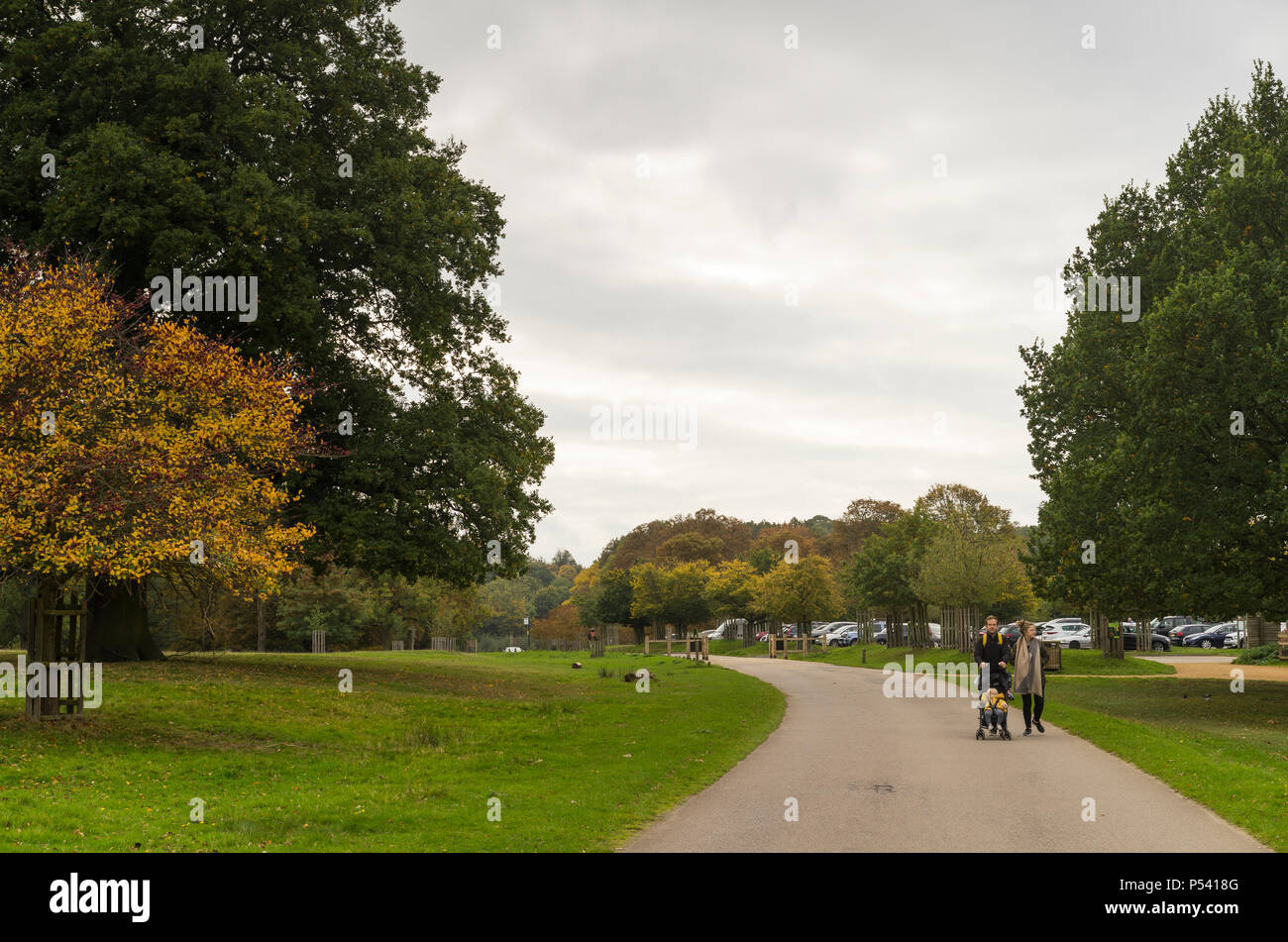 Richmond Park, Great Britain, October 14 2017, Beautiful nature and landscape photo of autumn day in England, - Stock Image