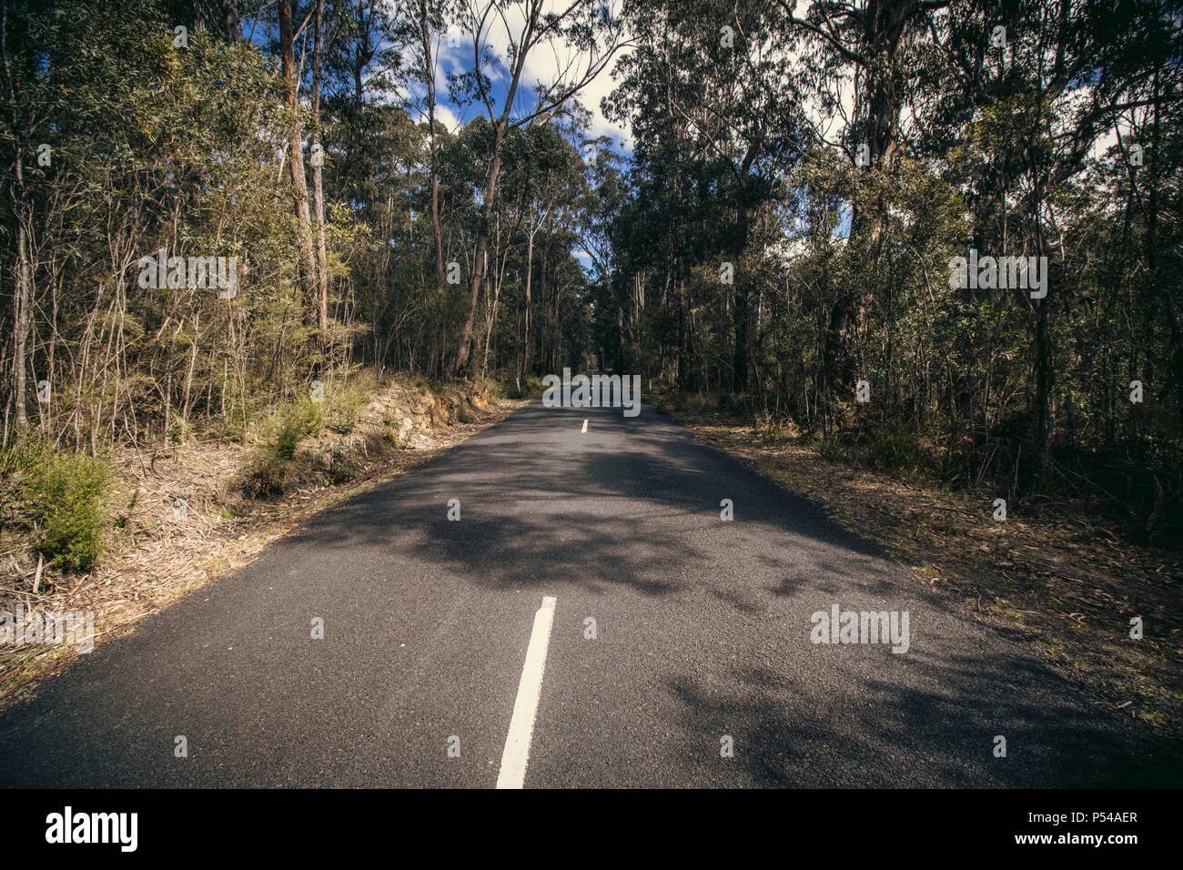 Long Straight Vanishing Point Road in Megalong Valley, NSW, Australia - Stock Image