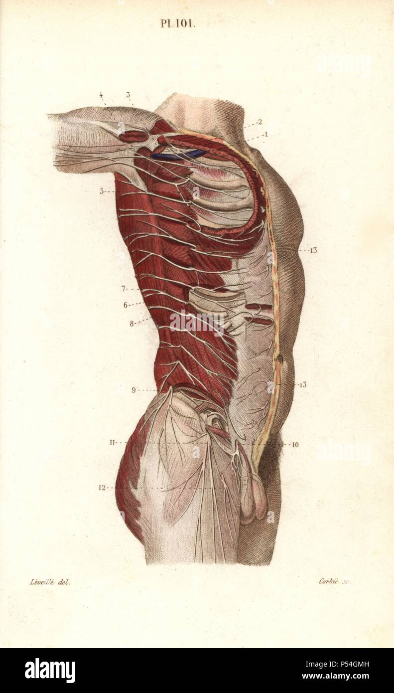 Pocket Anatomy Of The Human Body Stock Photos & Pocket Anatomy Of ...