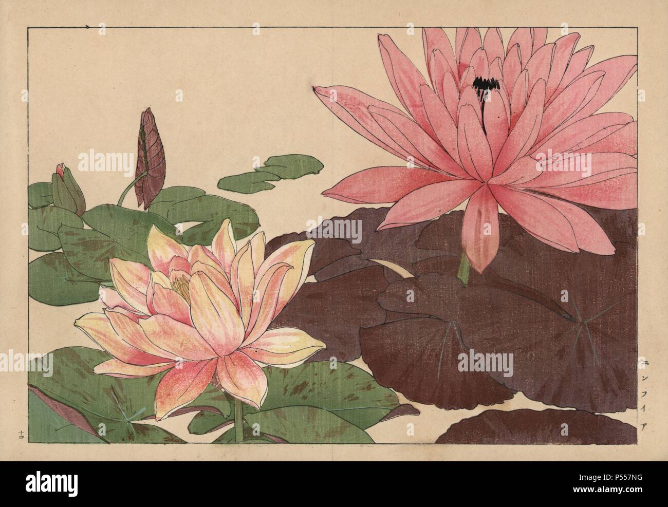 Lotus Flower Nelumbo Nucifera Handcoloured Woodblock Print From