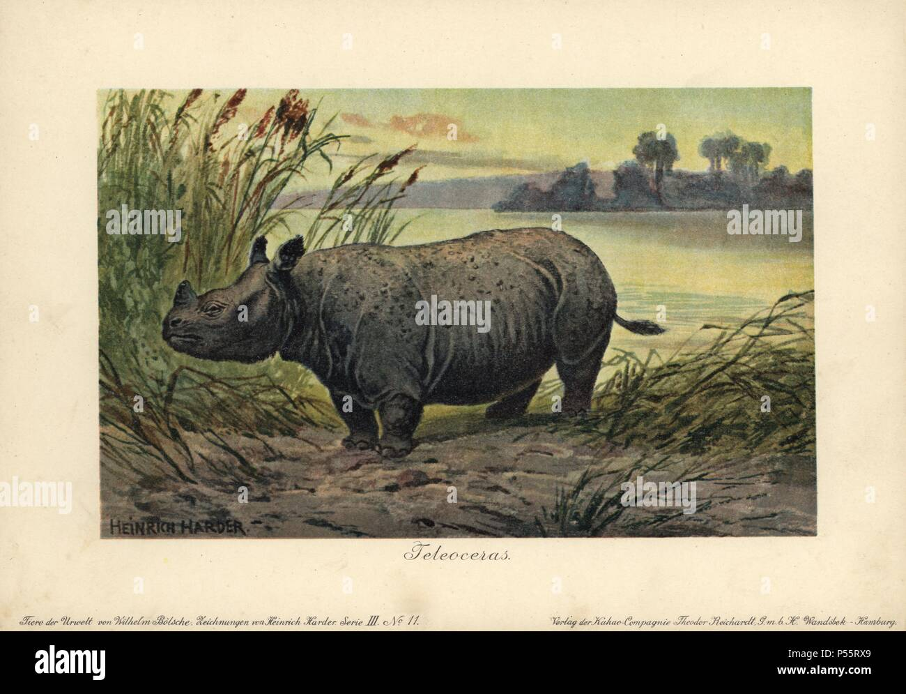 Teleoceras, extinct genus of grazing rhinoceros of the Miocene to early Pliocene epoch. Colour printed (chromolithograph) illustration by Heinrich Harder from 'Tiere der Urwelt' Animals of the Prehistoric World, 1916, Hamburg. Heinrich Harder (1858-1935) was a German landscape artist and book illustrator. From a series of prehistoric creature cards published by the Reichardt Cocoa company. Natural historian Wilhelm Bolsche wrote the descriptive text. - Stock Image