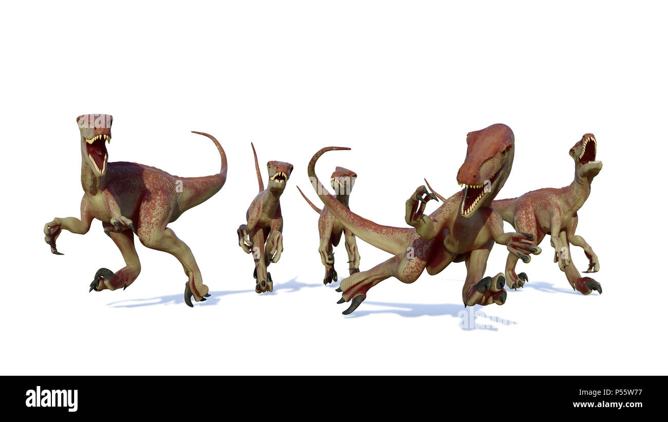 velociraptor pack, hunting theropod dinosaurs, 3d illustration isolated on white background - Stock Image