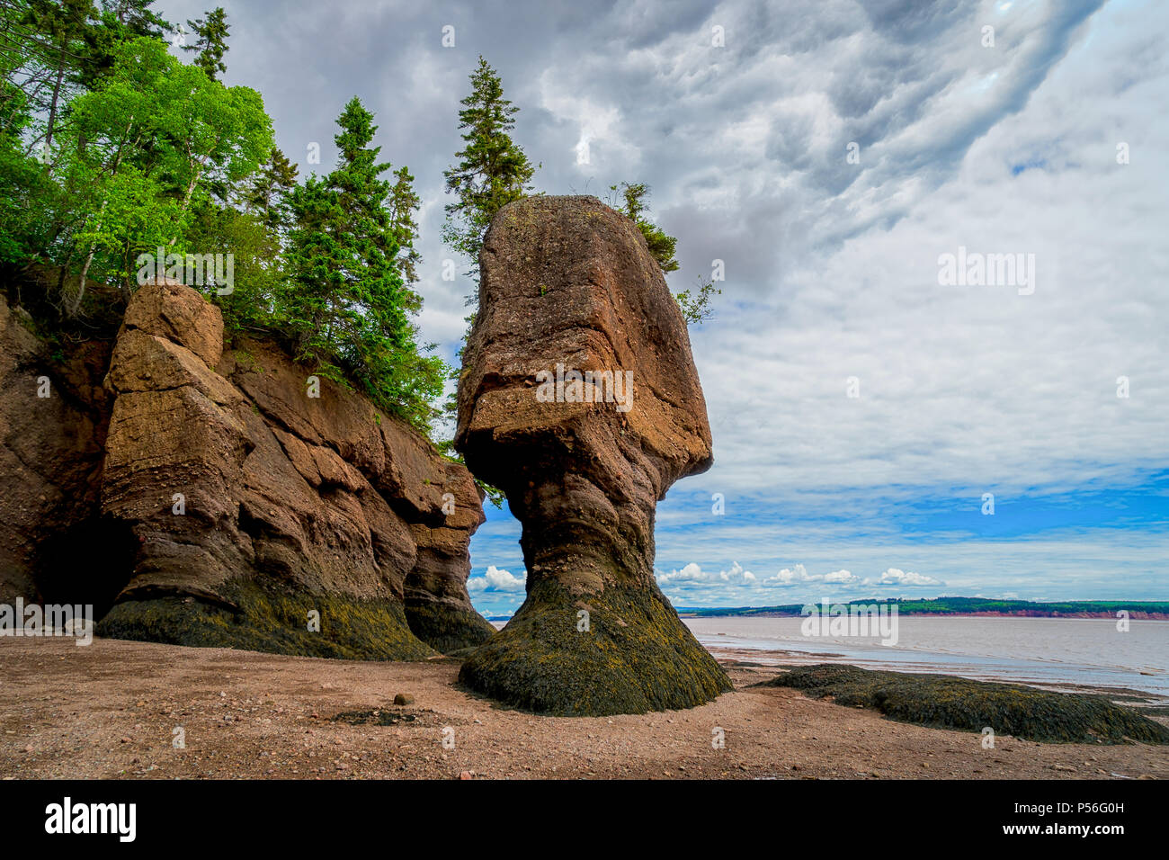 Genial The Hopewell Rocks Also Known As The Flowerpot Rocks, Along ...