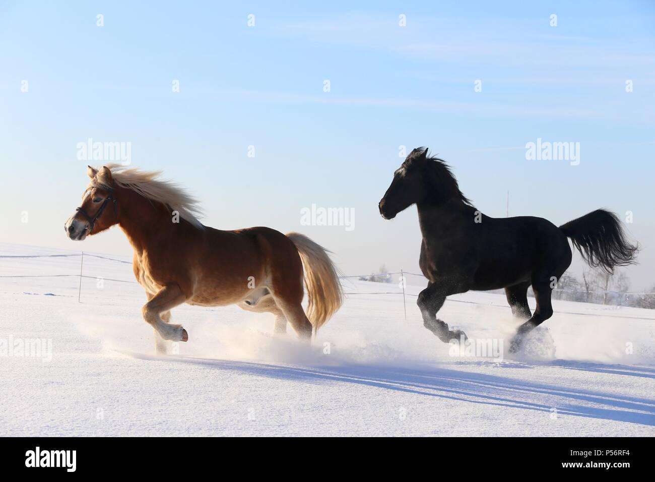 2 horses - Stock Image