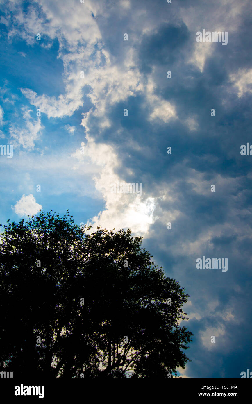 A sunny day with thunderclouds in the high format, in the foreground is a tree - Stock Image