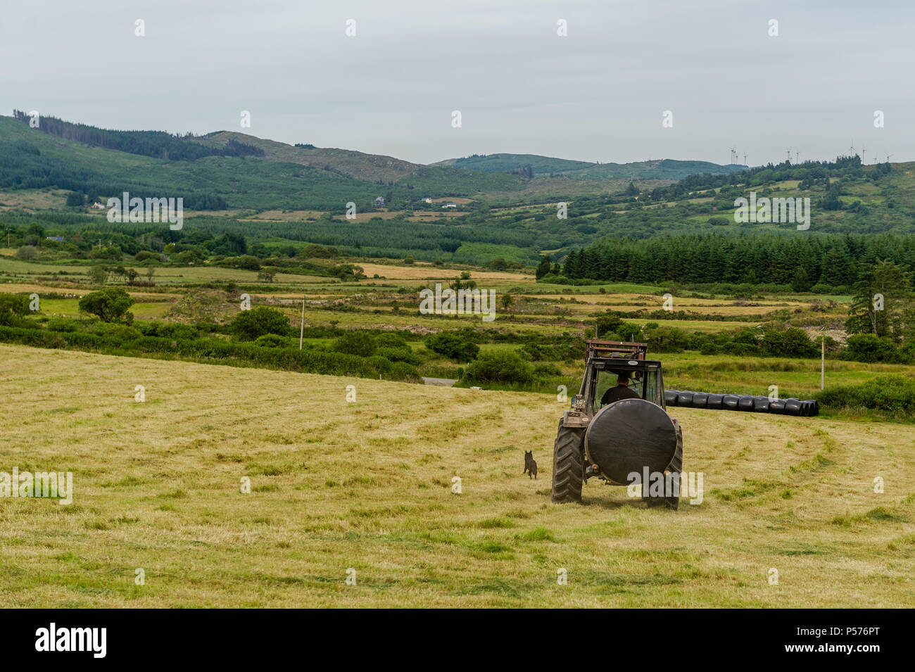 Ballydehob, West Cork, Ireland. 25th June, 2018. Ballydehob farmer Ben Deane and his dog Toby move a silage bail to storage on a very warm day. This is the prelude to a mini-heatwave in which temperatures are set to reach 31° degrees celsius by Thursday this week. Credit: Andy Gibson/Alamy Live News. - Stock Image