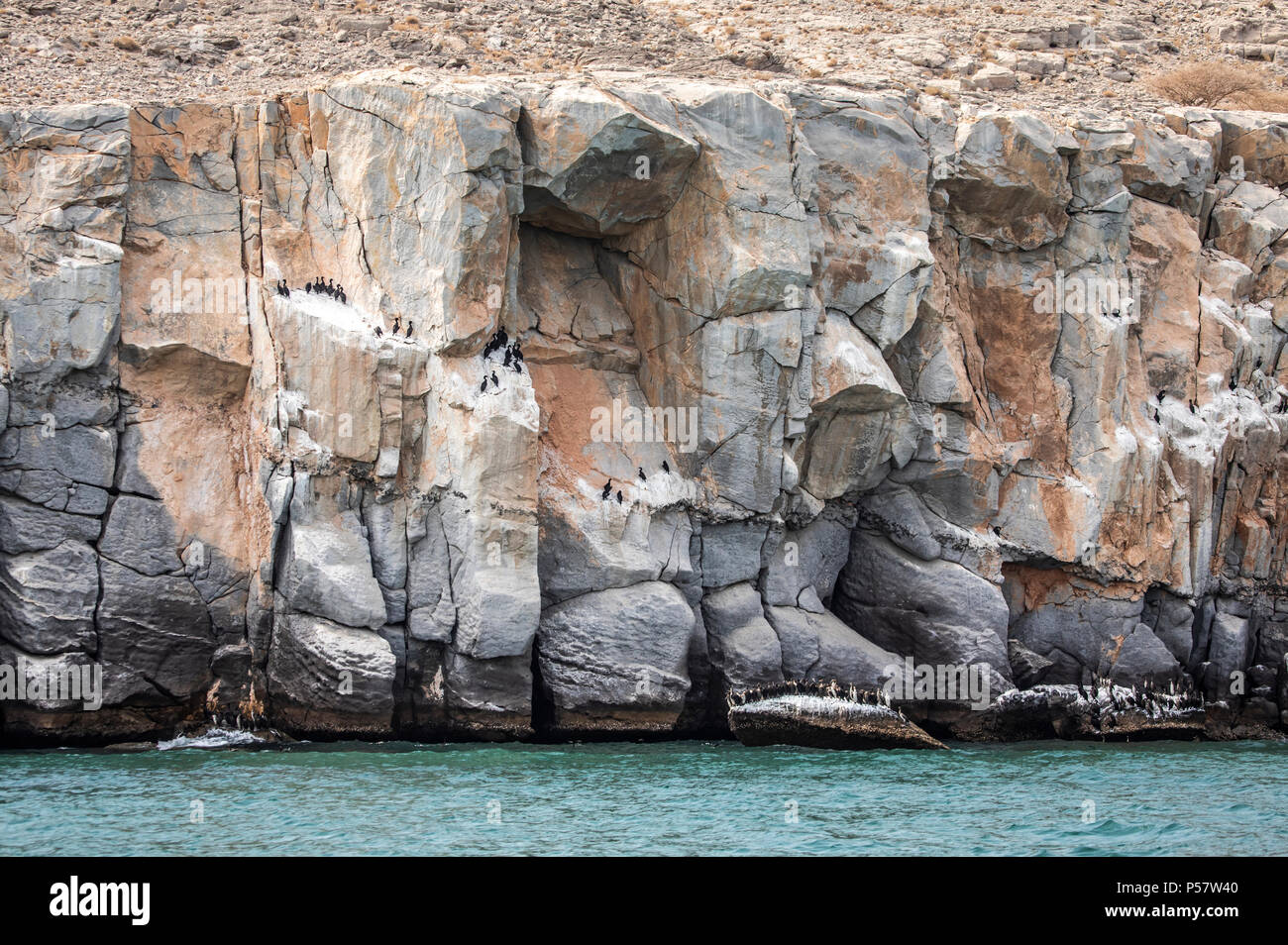 cormorant birds on a beach of Musandam in Oman, close to their nesting grounds - Stock Image