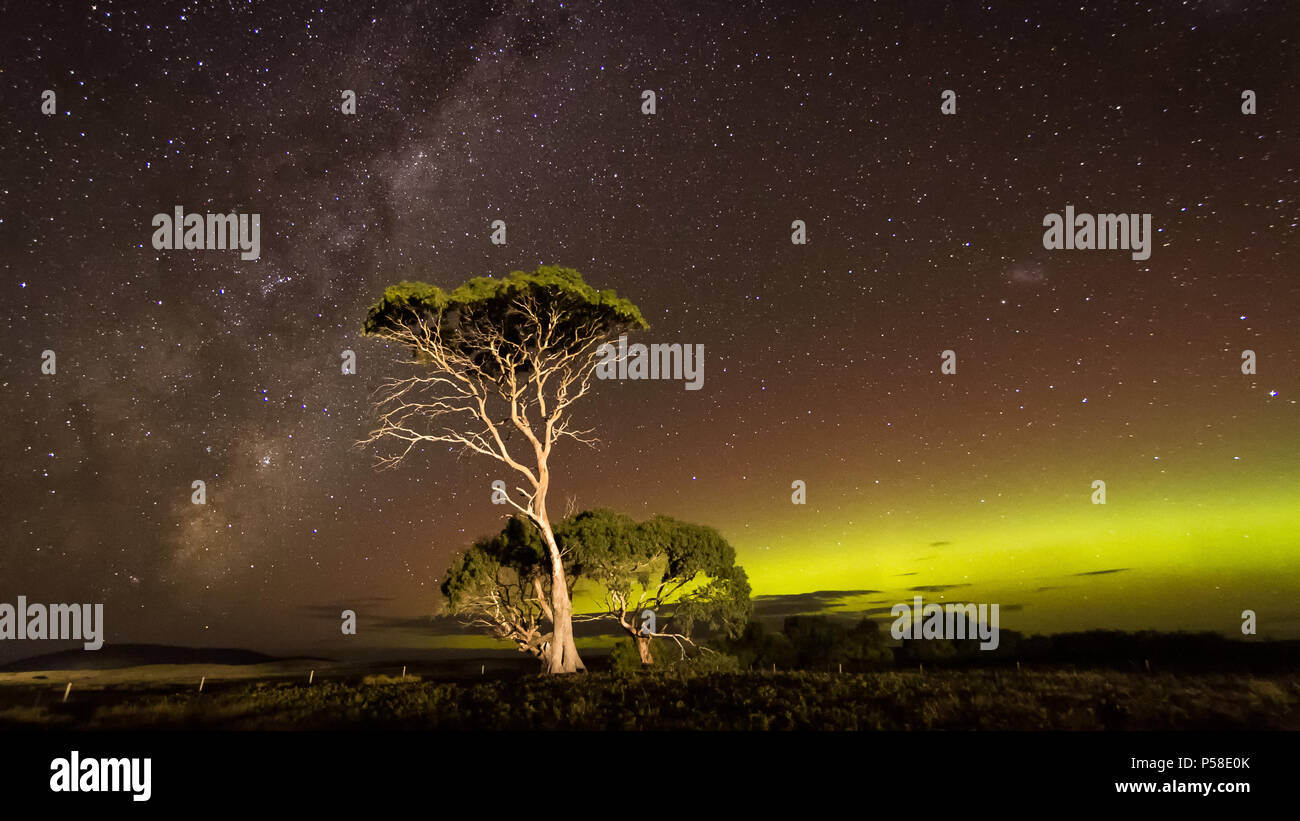 Green auroral arc and Milky Way behind gum tree - Stock Image
