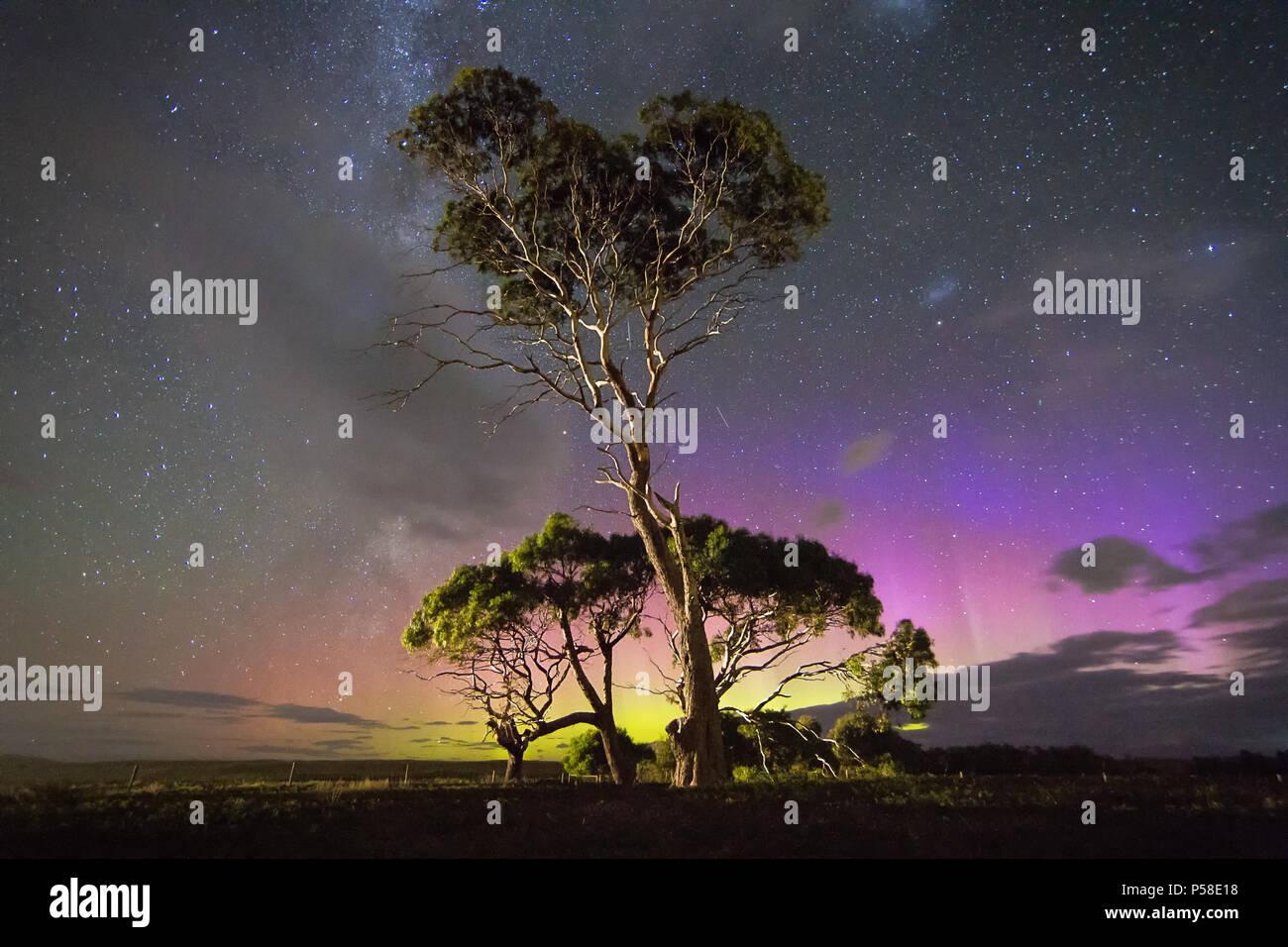 Colourful blue Aurora behind gum tree - Stock Image