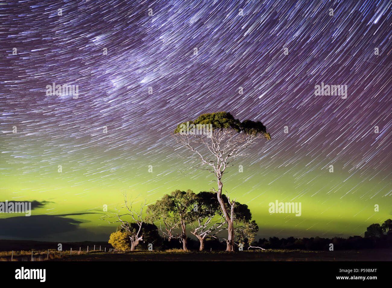 Aurora and star trail behind gum tree - Stock Image