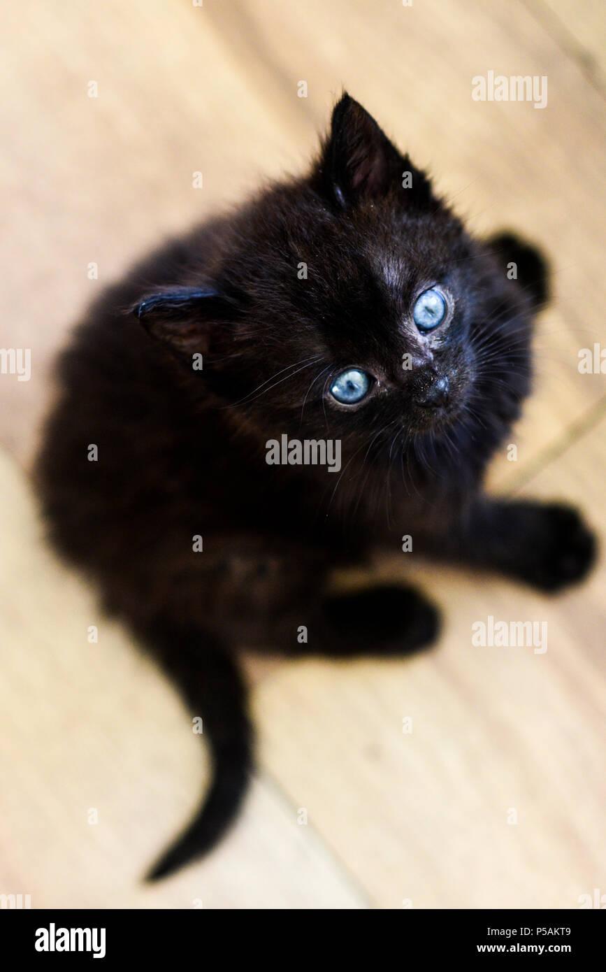 Little sweet black kitten.Little sweet black kitten. - Stock Image
