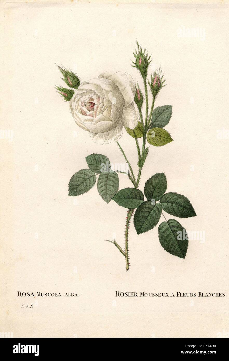 """Mother/'s day /""""illustrée fleurs roses-grande carte"""