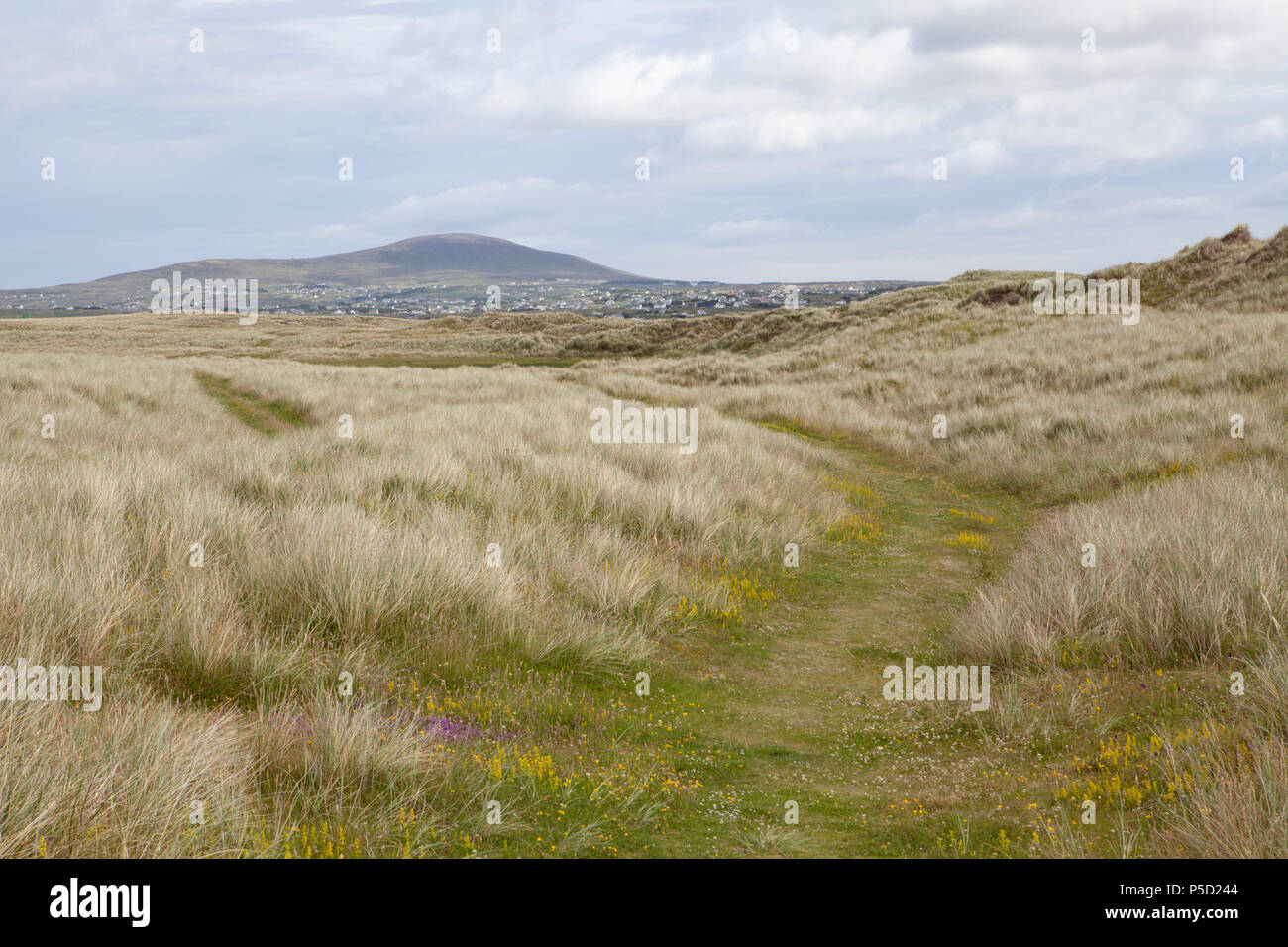 A mature sand dune system at Bunbeg on the County Donegal coast faces a range of threats including overgrazing and visitor damage - Stock Image
