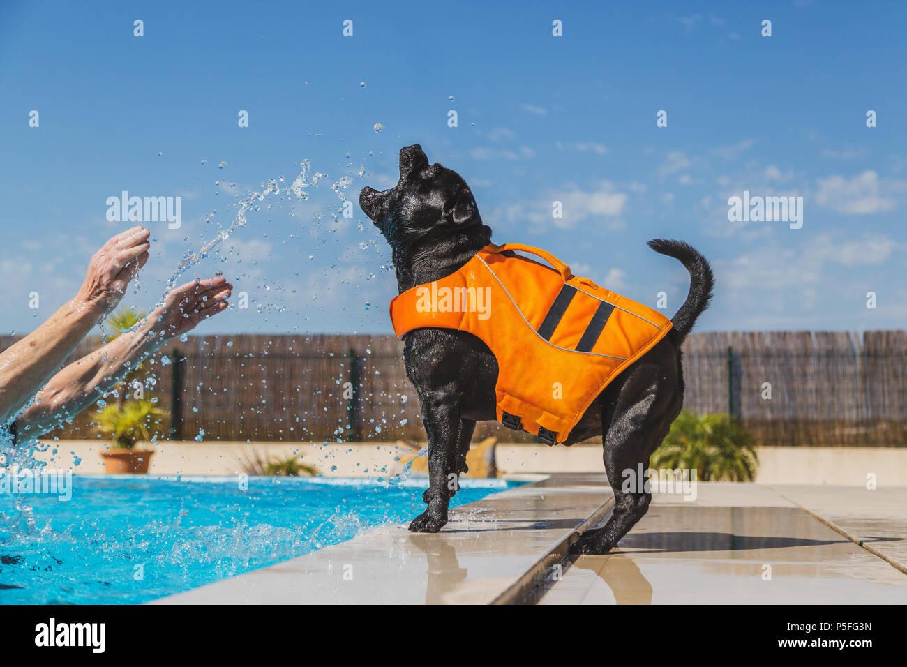 Dog In Life Jacket Stock Photos Dog In Life Jacket Stock Images Alamy