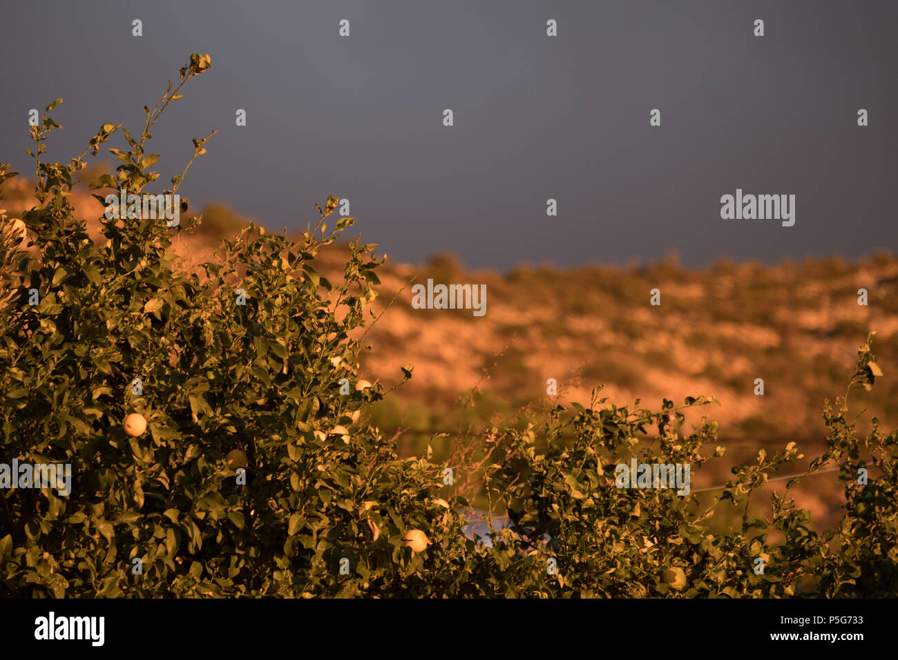 Greek mountain, Golden hour beautiful light with grey clouds, Lemon Tree. Saronida, Greece. Stock Photo