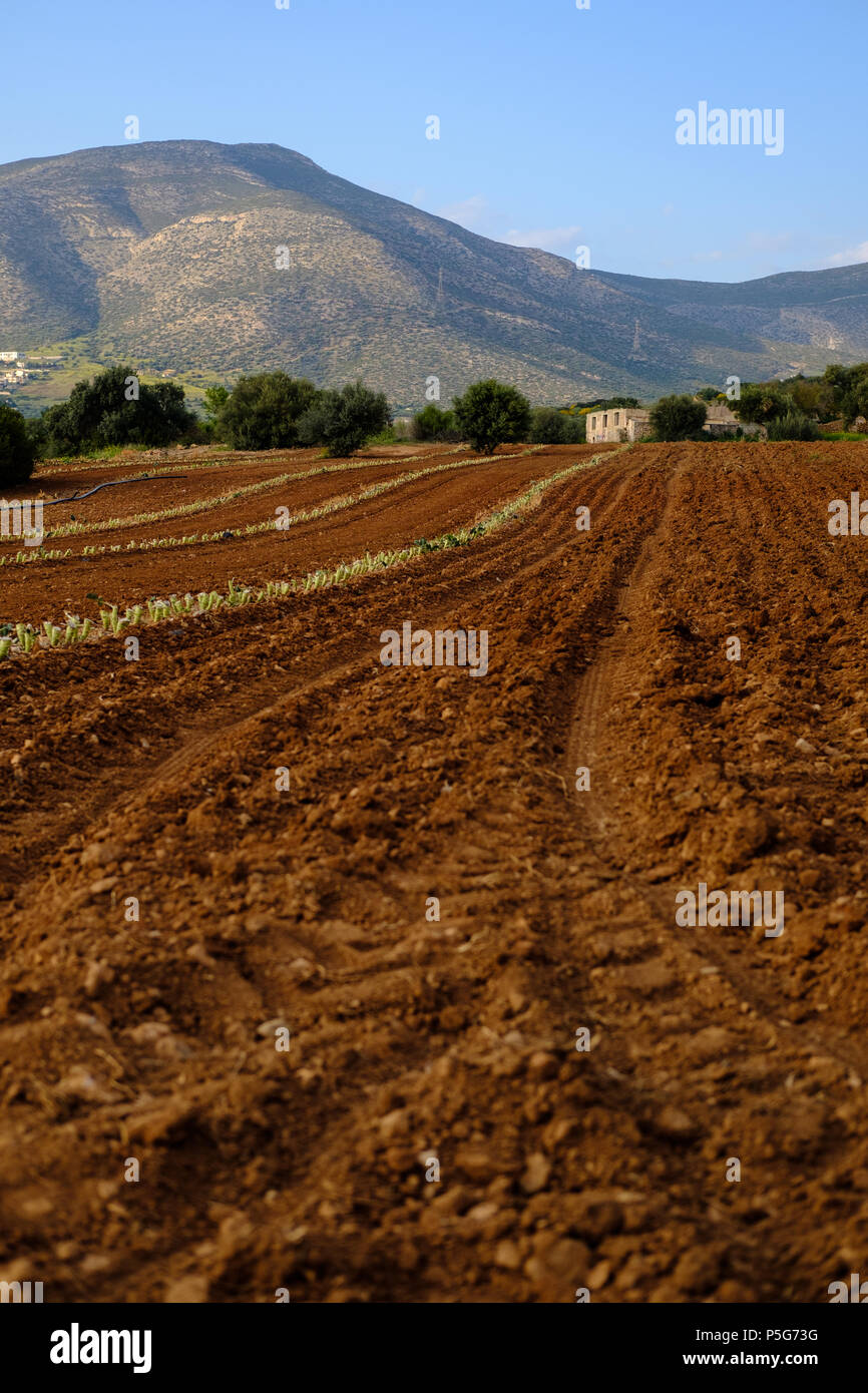 Plowed Farm Fields with farm house in preparation for latest crops with Mountains and Blue Skies, Lagonisi, East Attica, Greece. Stock Photo