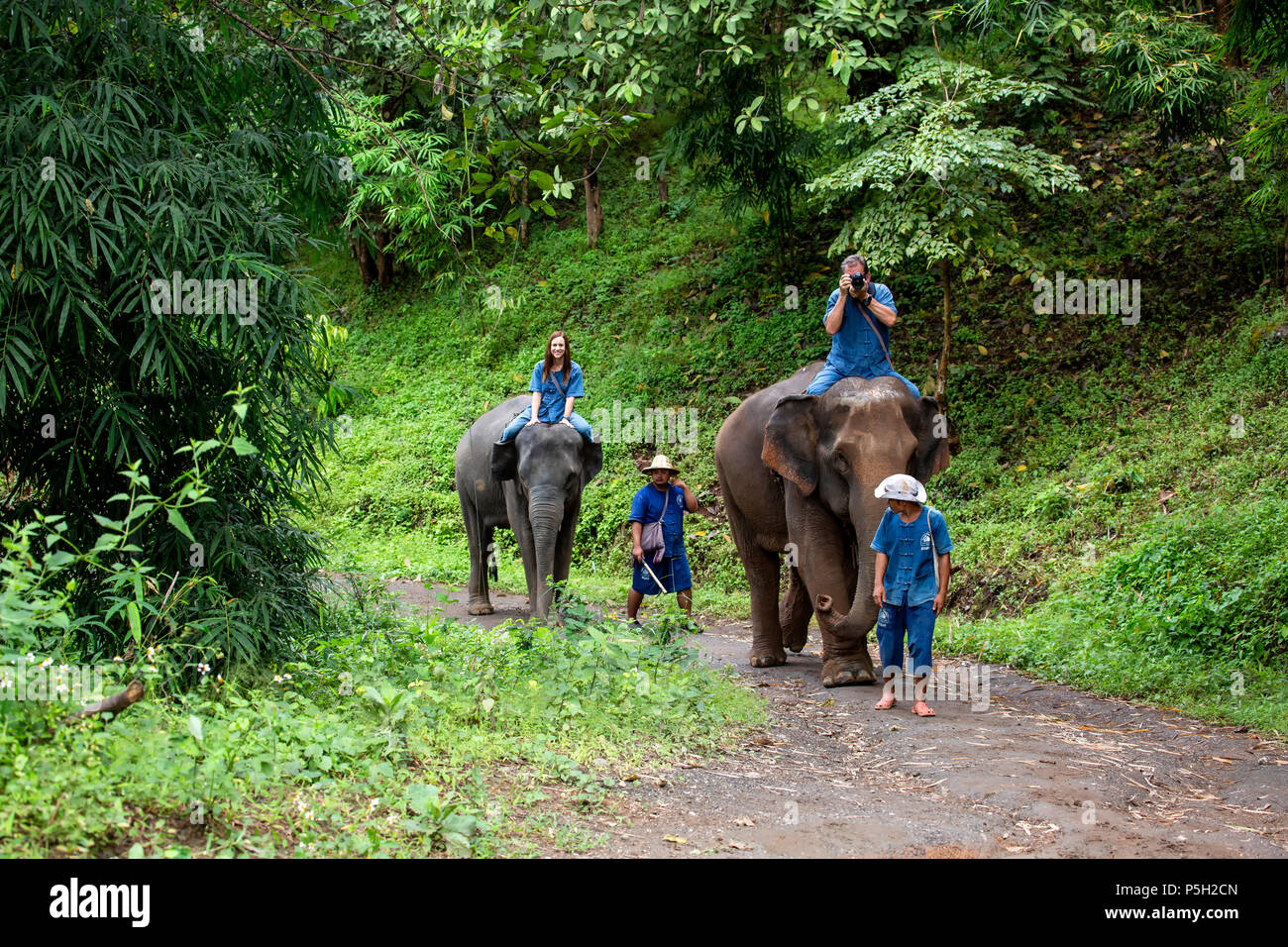 People riding Asian elephants (Elephas maximus) in jungle trail, Thai Elephant Home elephant farm, Keudchang Maetang, Chiang Mai, Thailand - Stock Image
