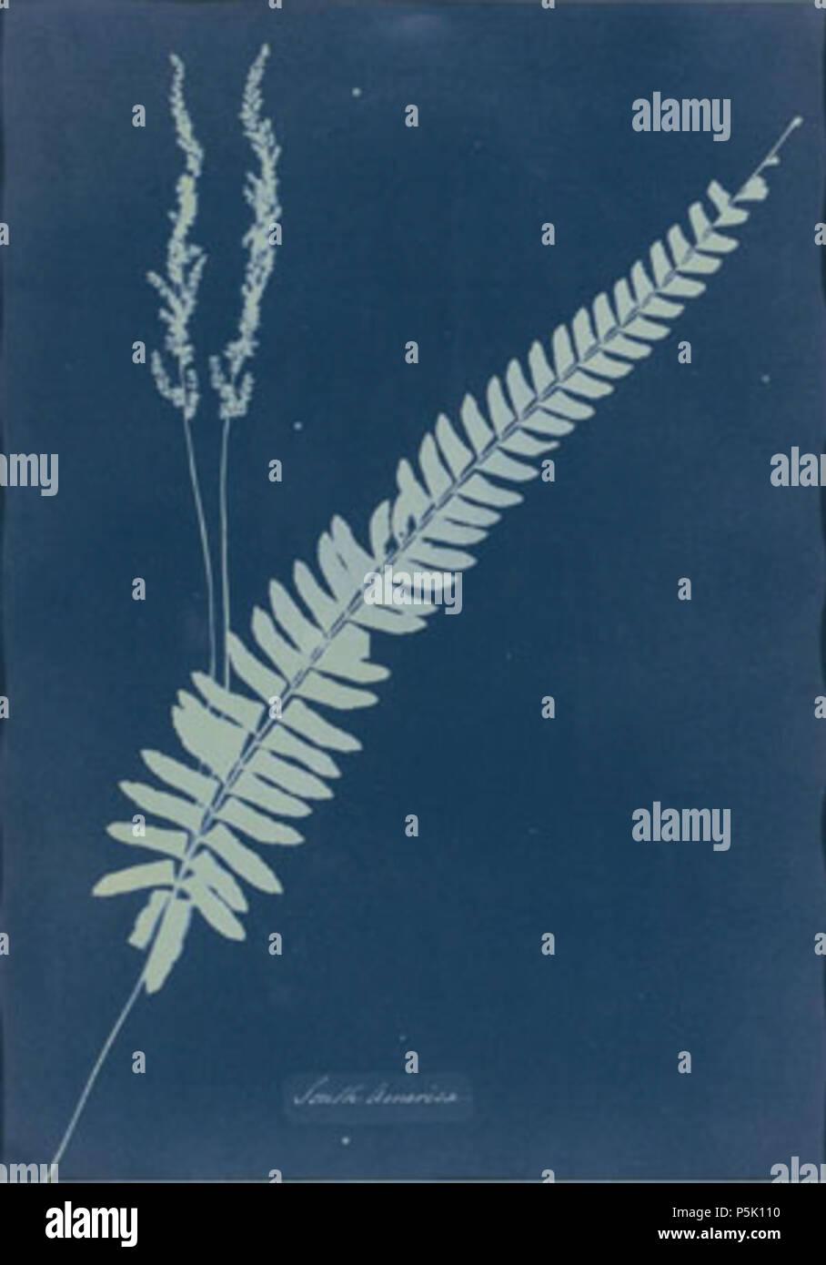 Na south america cyanotype photogram of a fern specimen circa na south america cyanotype photogram of a fern specimen circa 1851 54 anna atkins 17991871 alternative names anna children a a anna ne children freerunsca Images