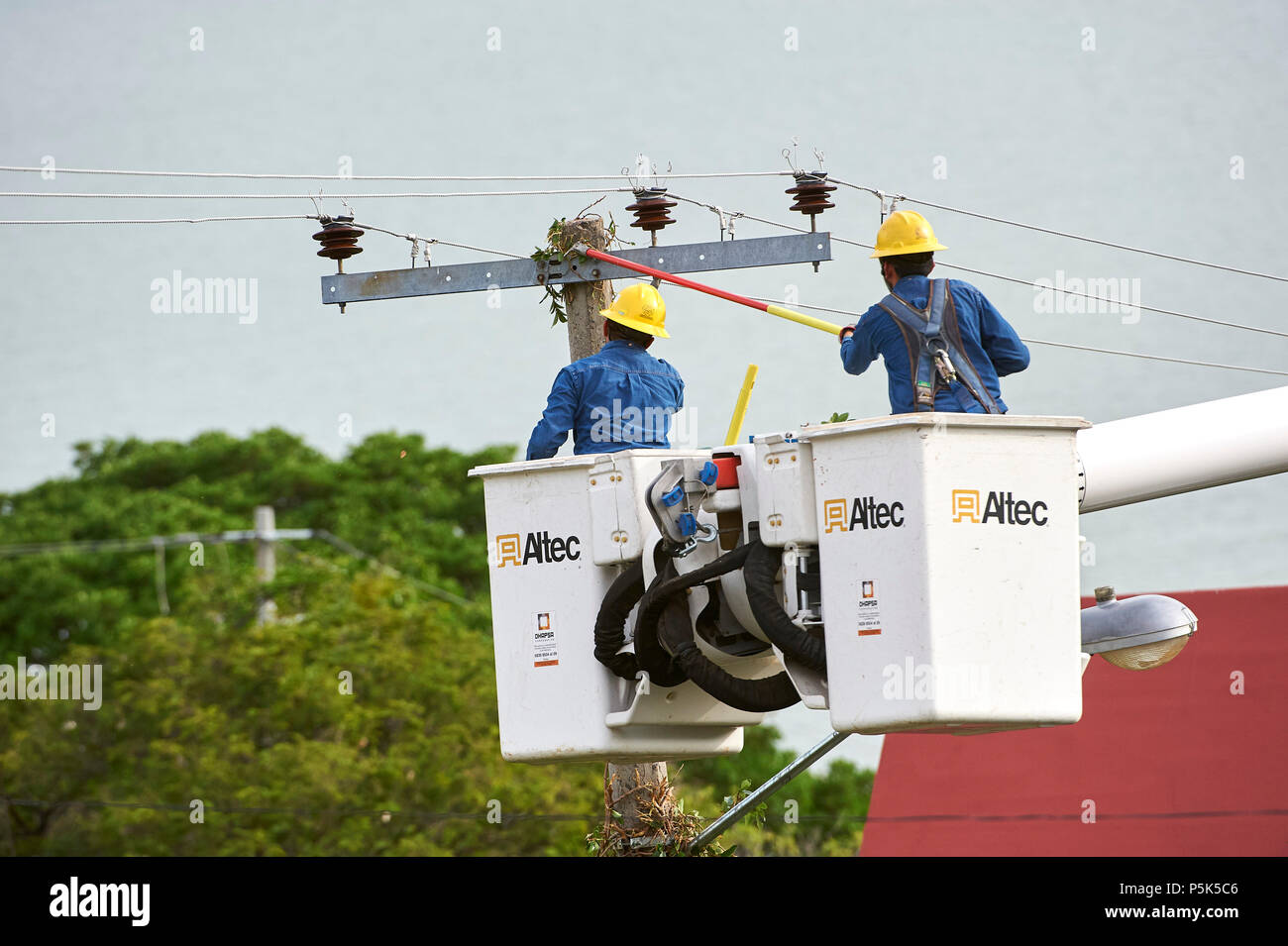 Electricity workers clear vines growing up power poles and causing short circuits and power outages -  San Juan Cosala, Jalisco, Mexico - Stock Image
