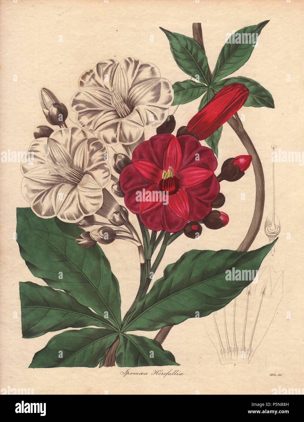 Female Flower With Ovary Stock Photos Female Flower With Ovary