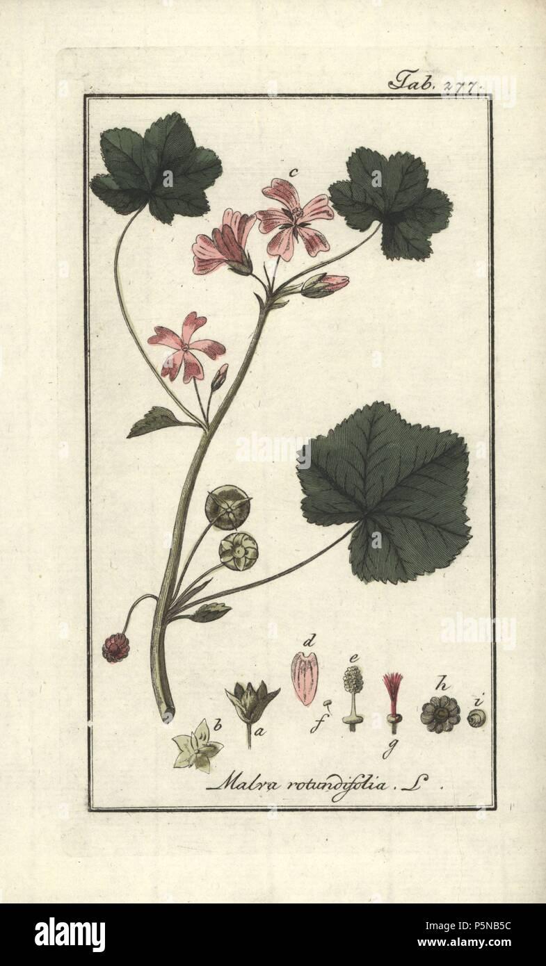 Round-leaved mallow, Malva rotundifolia  Handcoloured