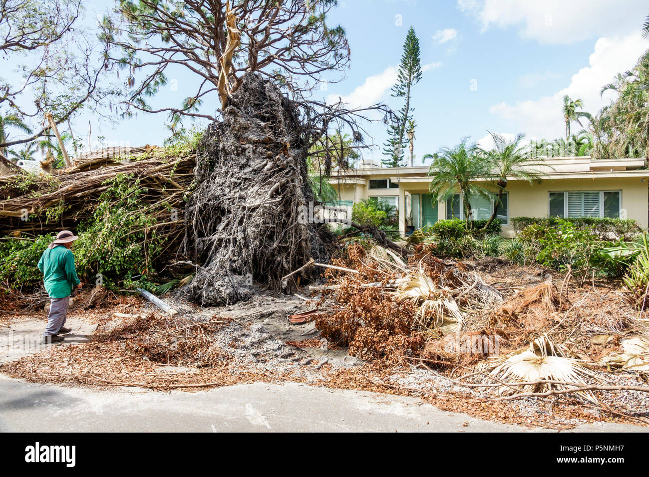 Naples Florida Crayton Road Hurricane Irma wind damage destruction aftermath fallen trees bushes branches debris pile storm disaster recovery cleanup Stock Photo