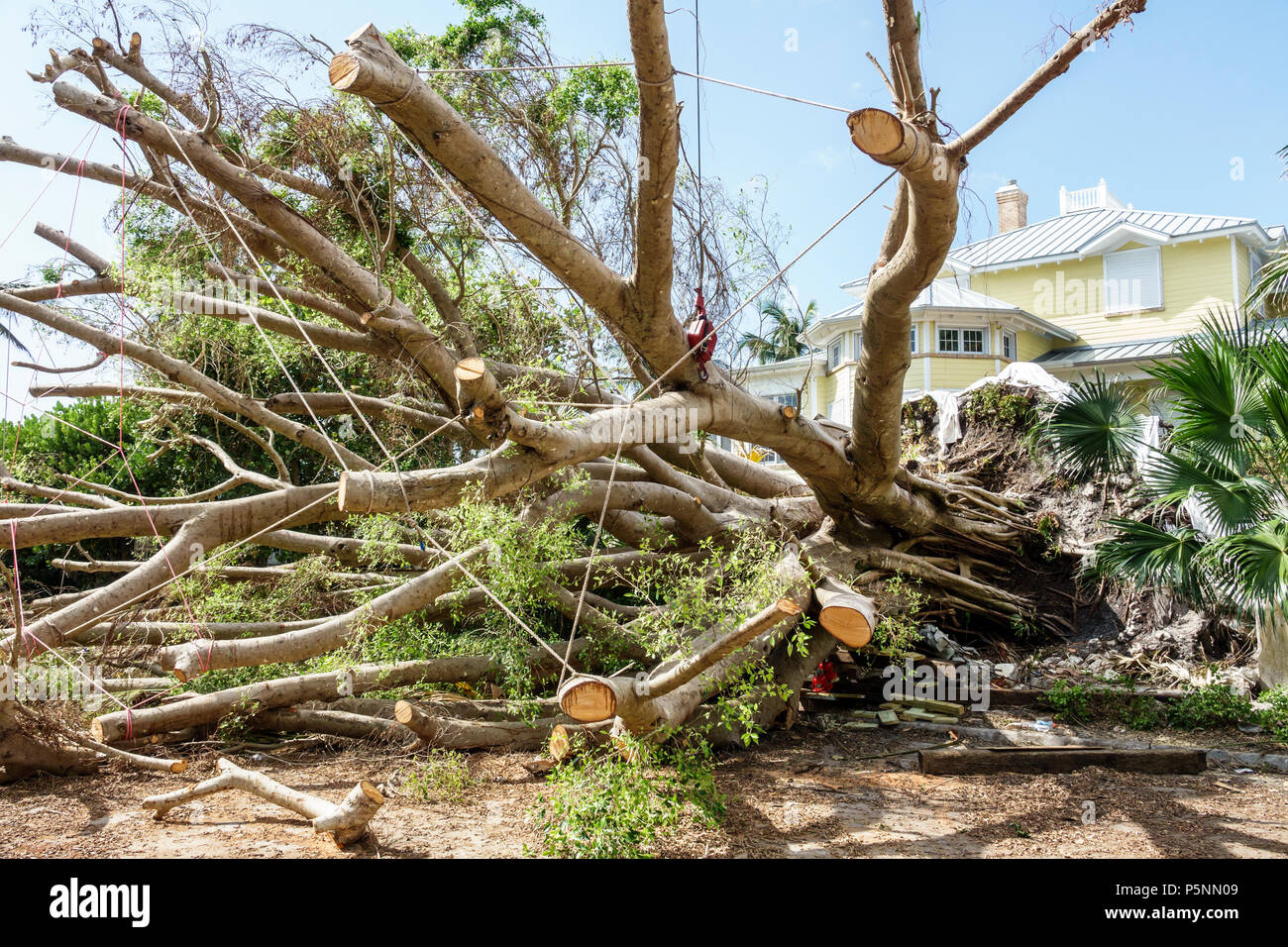 Naples Florida Crayton Road Hurricane Irma wind damage destruction aftermath fallen trees removal storm disaster recovery cleanup front yard - Stock Image