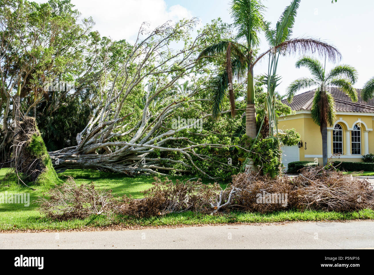 Naples Florida Crayton Road house home Hurricane Irma wind storm damage destruction aftermath fallen toppled over large tree root system lawn - Stock Image