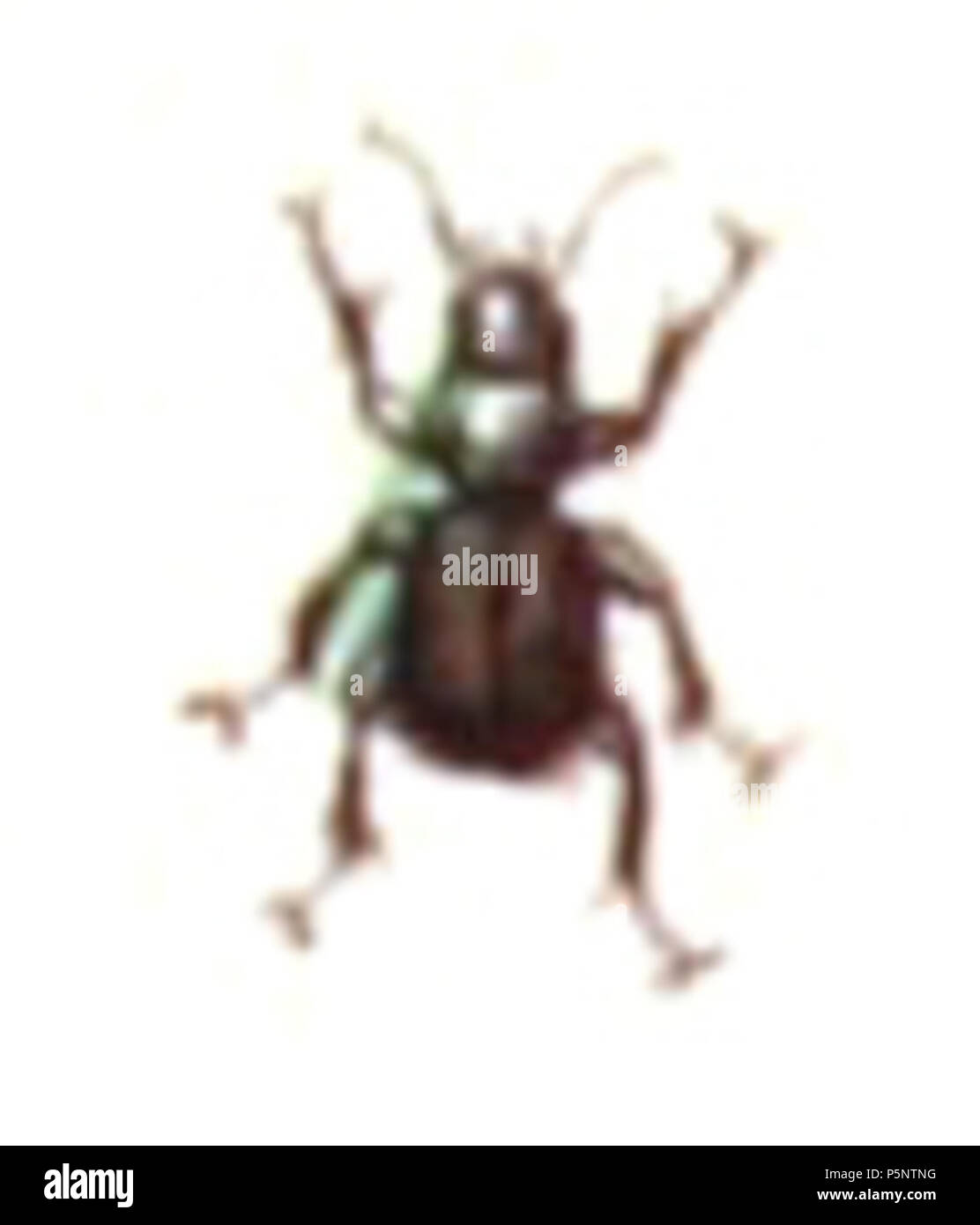 N/A. Metallina lampros = Bembidion lampros, from Calwer's Käferbuch, Table 6, Picture 32. Taxonomy was updated to 2008, using mostly the sites Fauna Europaea and BioLib. Please contact Sarefo if the determination is wrong! . 1876. Book by   Carl Gustav Calwer  (1821–1874)    Description German ornithologist and entomologist  Date of birth/death 11 November 1821 19 August 1874  Location of birth/death Stuttgart Mineralbad Berg  Authority control  : Q78413 VIAF:64757747 ISNI:0000 0001 0980 5321 GND:116432969 SUDOC:146603133 Koninklijke:07228000X      Gustav Jäger  (1832–1917)     Alternative nam - Stock Image