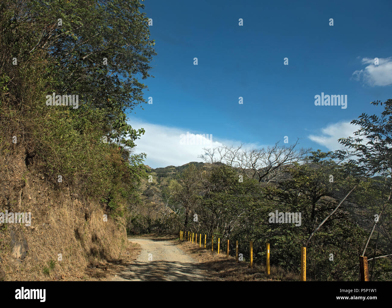 close gravel road in monteverde reserve cloud forest, costa rica - Stock Image