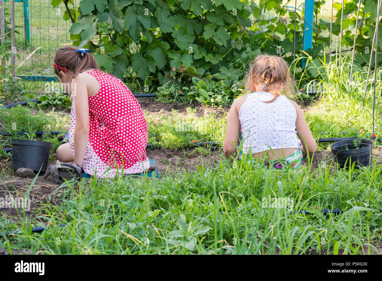 Closeup image of two teenage girls weeding garden bed. Female Gardening Weeding Weed Plants Grass